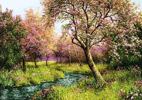 منظره شکوفه درختان بهار پر ابریشم