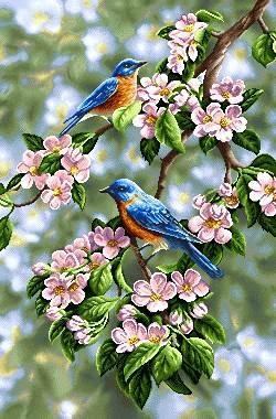 پرنده شکوفه بهاری