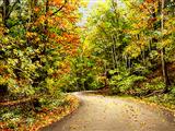 جاده جنگلی پاییزی