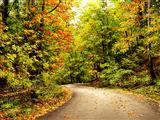 منظره جاده پاییزی جنگل
