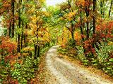 جاده پاییزی جنگلی