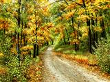 جاده جنگلی پاییزی زیبا