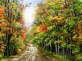 جاده خاکی جنگل پاییزی