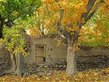 دیوار گلی و درخت پاییزی