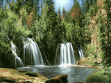 طبیعت آبشار جنگل
