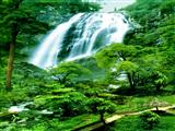 آبشار طبیعت سرسبز