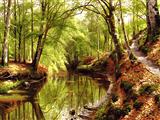 برکه در جنگل
