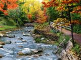 رودخانه سنگی در جنگل پاییز