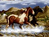 دویدن اسبها در رود