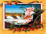 طوطی سفید