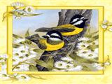 پرندگان زرد