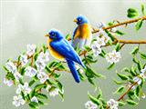 پرنده در بهار