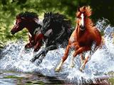 دویدن اسبها در رودخانه