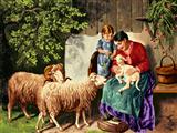تولد بره گوسفند