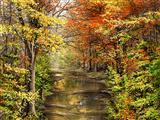 پاییز جنگل