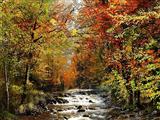 پاییز جنگل 3