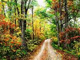 راه پاییزی