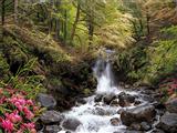 آبشار جنگلی