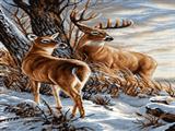 گوزن و آهو در زمستان