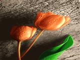 شاخه گل لاله نارنجی