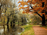 رودخانه پارک جنگلی