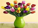 گلدان گلهای لاله رنگارنگ