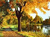 پارک جنگلی در پاییز