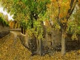طبیعت پاییزی روستا